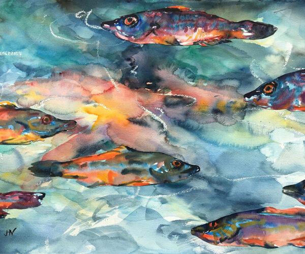 Cornish Fish, watercolour, lively